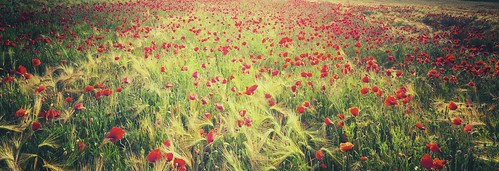 light red france flower nature fleur colors field grass canon vintage landscape rouge photography eos photo couleurs champs meadow sigma wideangle lumiere 7d poppy prairie 1020mm paysage effect campagne franchecomté herbe coquelicot effet cokin gnd4 p121m philippesaire