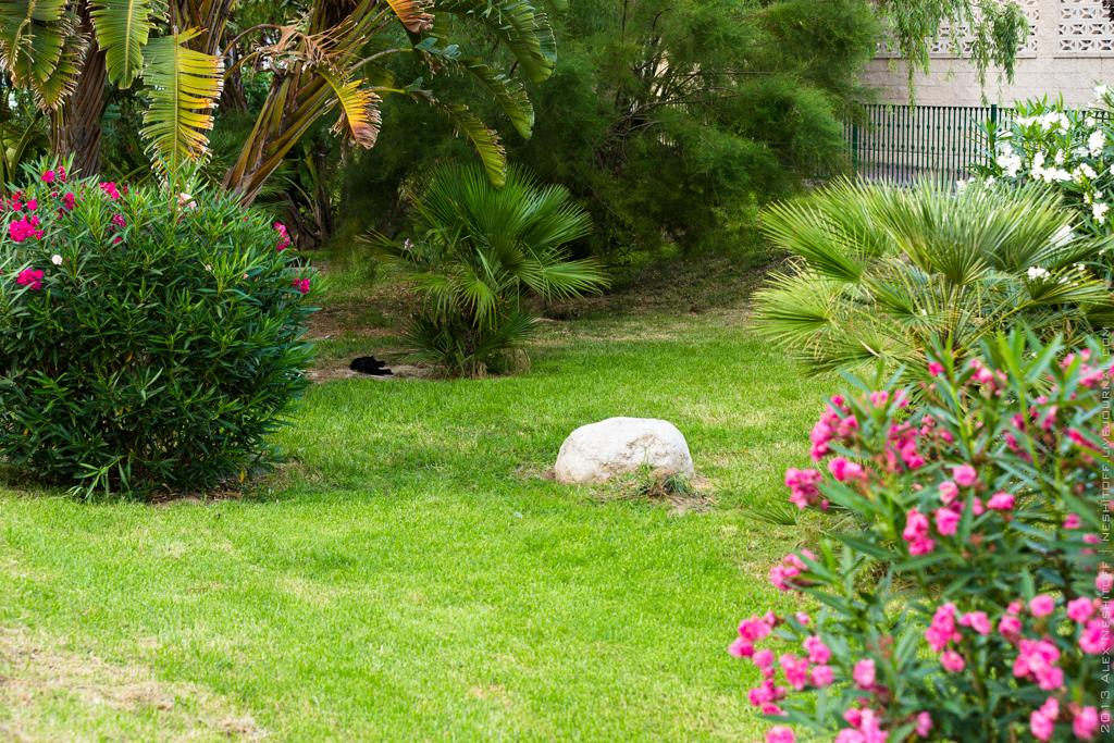 2013-Spain-Benidorm-CatsParadise-007