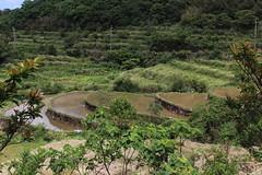 貢寮當地進行生物多樣性調查,光是水生昆蟲和植物就記錄到500多種;當地比較平緩或較低的地方,可看見毛蟹、過山蝦。