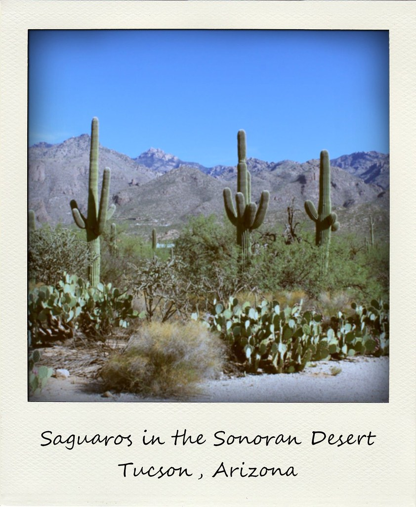polaroid of the week arizona tucson saguaro cacti