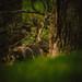 Stalker by AGraddyPhoto