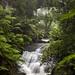 Mount Wilson trip - Leura Cascades - under the bridge by leighberry