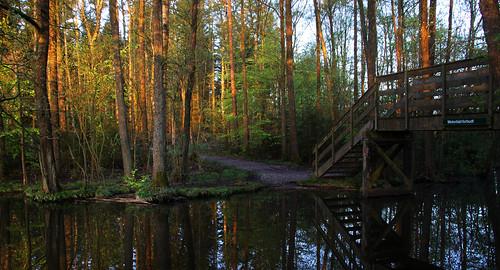 trees lake reflection water forest landscape woods outdoor træer serene rays bäume skov sø silkeborg spejling søhøjlandet vejlsø