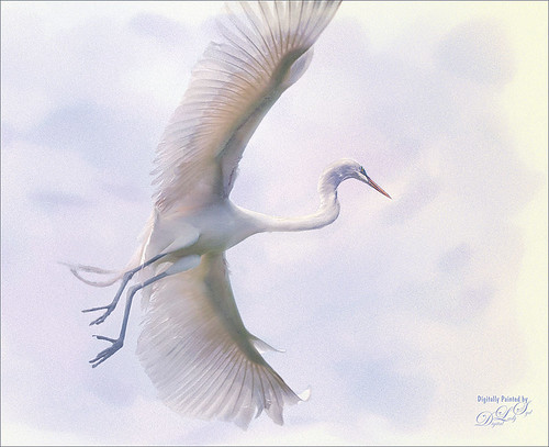 Image of a flying Great Egret