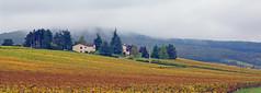 2016-10-24 10-30 Burgund 169 Collongette - Photo of Péronne