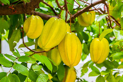 Organic Star Fruit - Thai fruit fresh farm