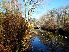 Mill Pond Park -- Autumn (76)