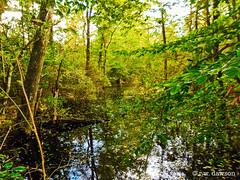 Wetlands at the Mattaponi WMA