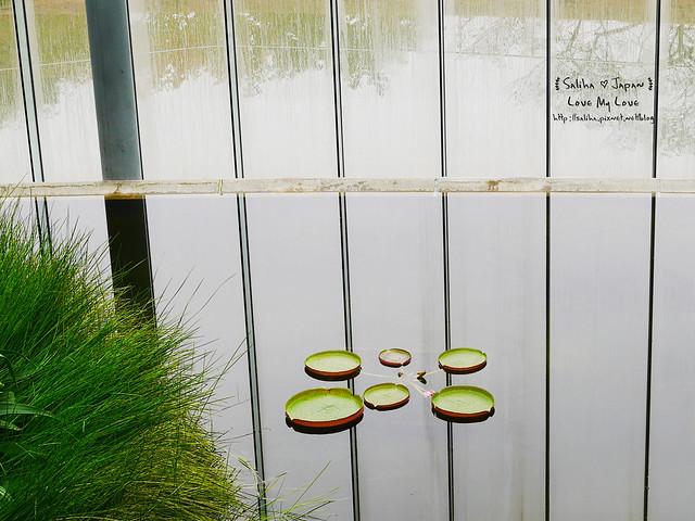 日本東京景點新宿御苑溫室植物 (12)