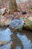 Great Blue Heron, Greensboro, NC, 2006