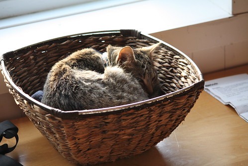 Basket case by ricmcarthur