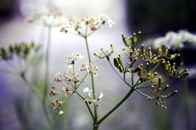 kukkiii pikkuuu