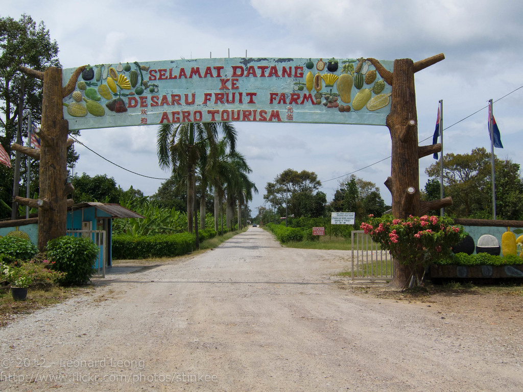 Fruit farm at Desaru, Johor