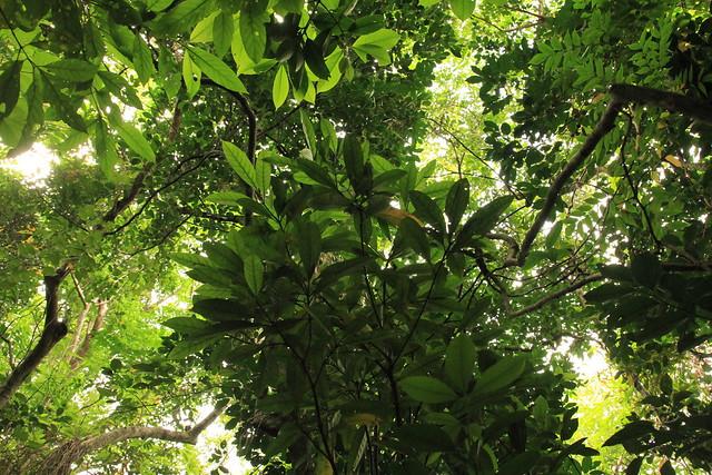 iriomote jungle 西表島ジャングル