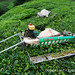 modern equipment at Cameron Highlands Malaysia [Boh]