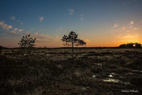 nature water swamp bog wetland kevät suo siikaneva