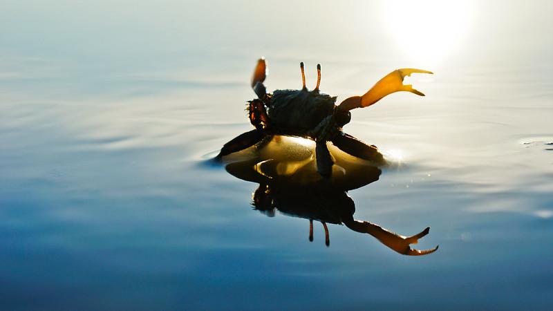 螃蟹式的浪漫