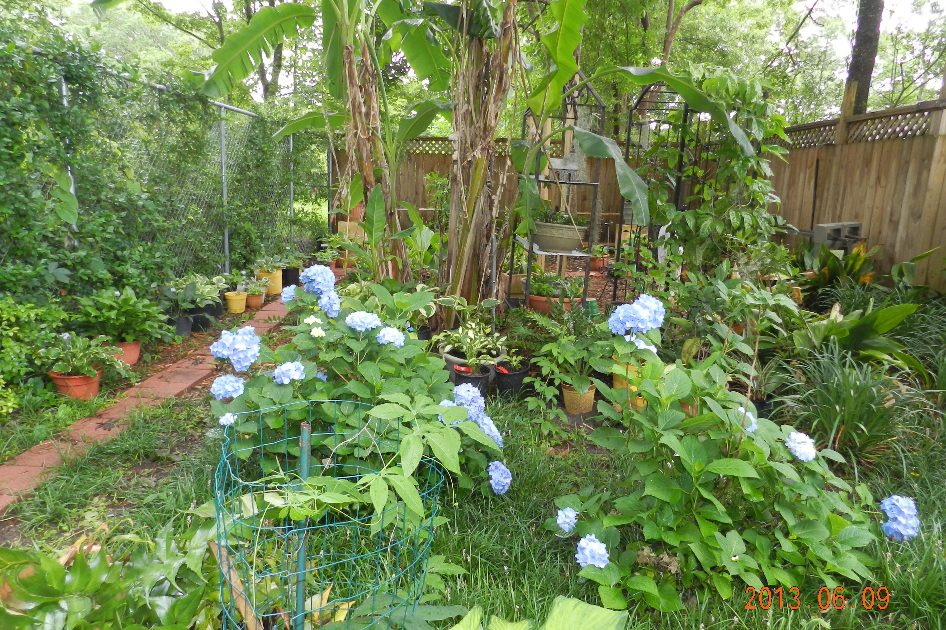 Garden13Jun0473