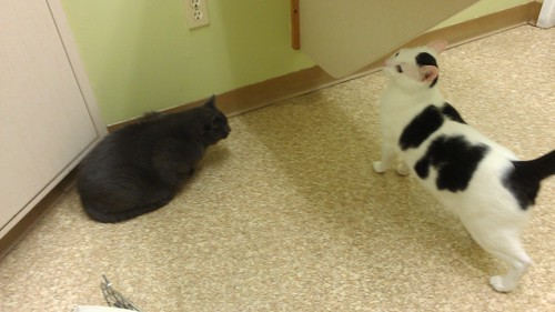 Angry kitties at their checkup by christopher575