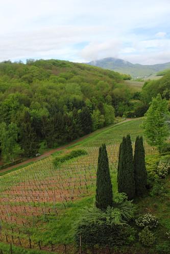 Viinipeltoja, Itterswiller, Alsace, Ranska