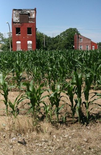 Feed Corn on an Urban Farm in North St. Louis