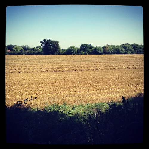 The field in harvest