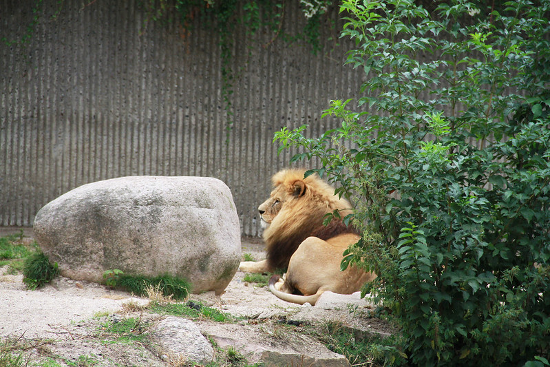 Köpenhamn zoo med Frida!