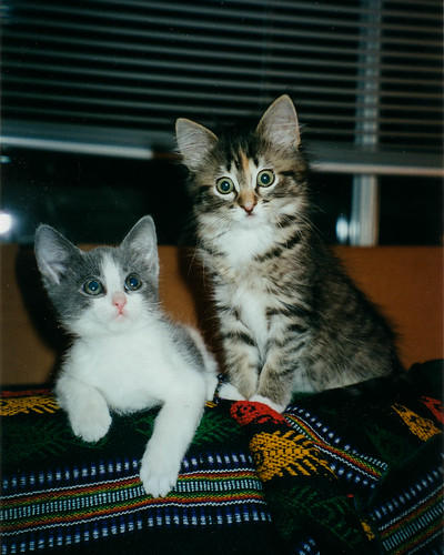 Mo and Cleo as kittens