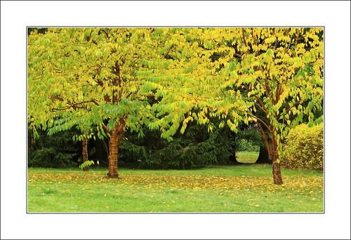 autumn fall colours ruska sigmaex70200mmf28iimacro