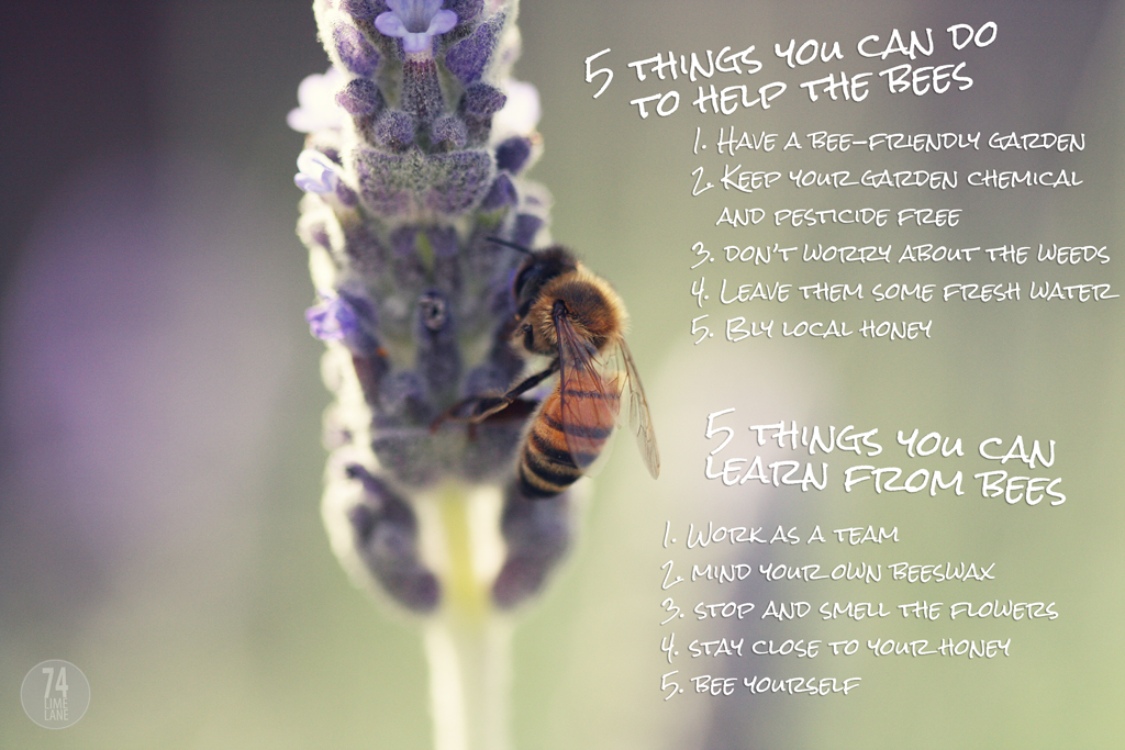 work and learn with the bees