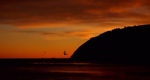 Gulls at dawn