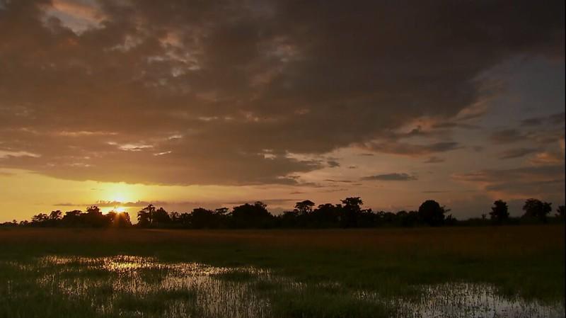 印度卡齊蘭加國家公園濕地一景。(動物星球頻道提供)