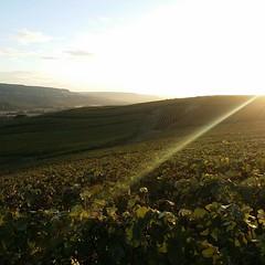 Comme dans Blake & Mortimer #Catchit #URay #Vineyards #nofilter #Champagne #Tarlant #Vigneron #depuis1687 #igersreims