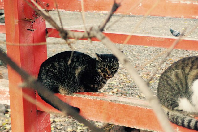 Today's Cat@2016-11-20
