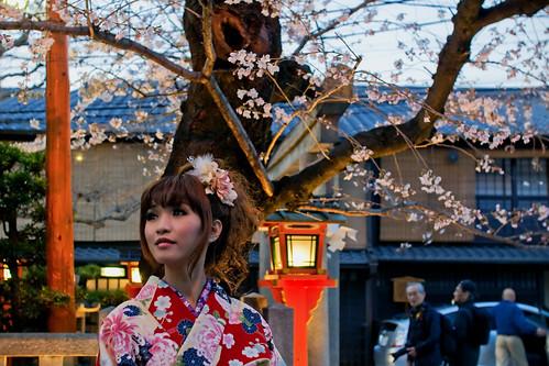 Kimono girl and sakura