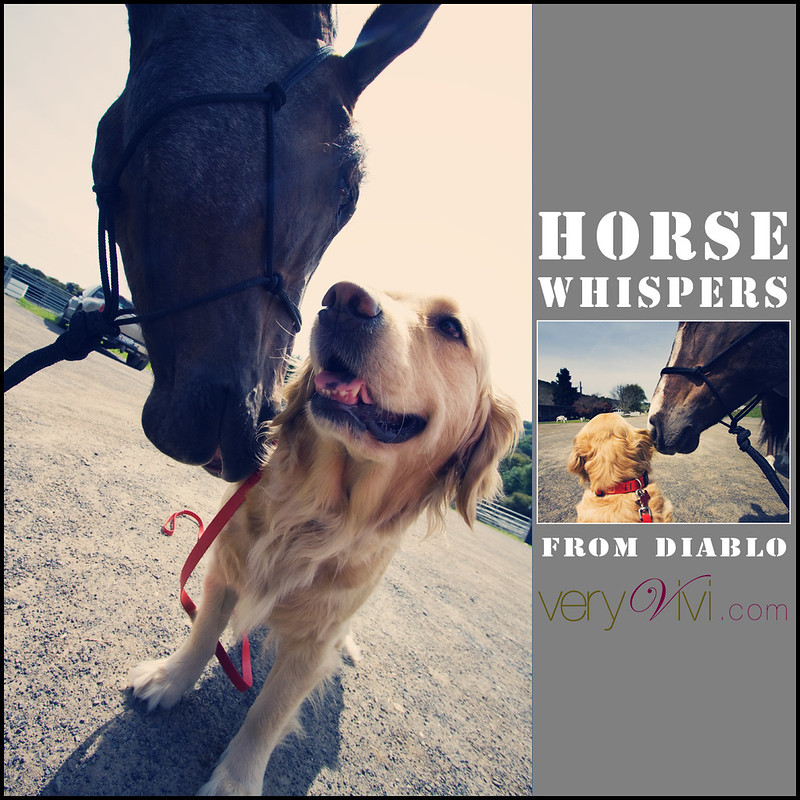 Horse Whispers From Diablo