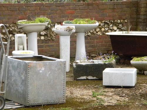 Sink gardens