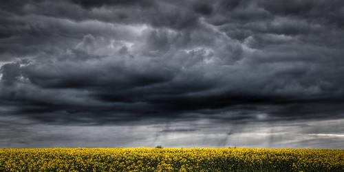 [フリー画像素材] 自然風景, 空, 雲, 田園・農場, 菜の花・アブラナ, 暗雲, 嵐, HDR ID:201204202000