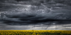 [Free Images] Nature, Sky, Clouds, Field / Farm, Rapeseed / Canola, Dark Clouds, Storm, HDR ID:201204202000