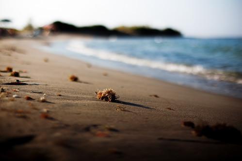 sea summer beach sand solitude mare alone dof bokeh sponge acqua salento puglia spiaggia sabbia wideopen apulia esatate zuiko50mmf12 canoneos5dmarkii robertozito robezito