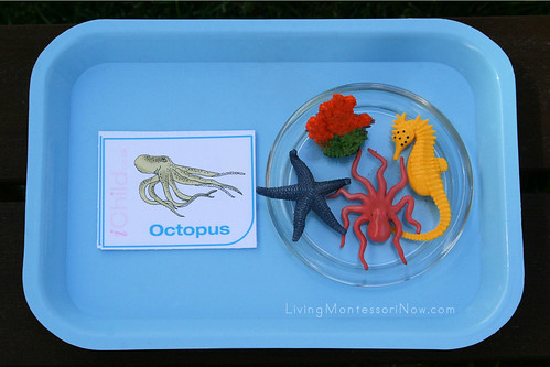 Ocean Language Matching Tray