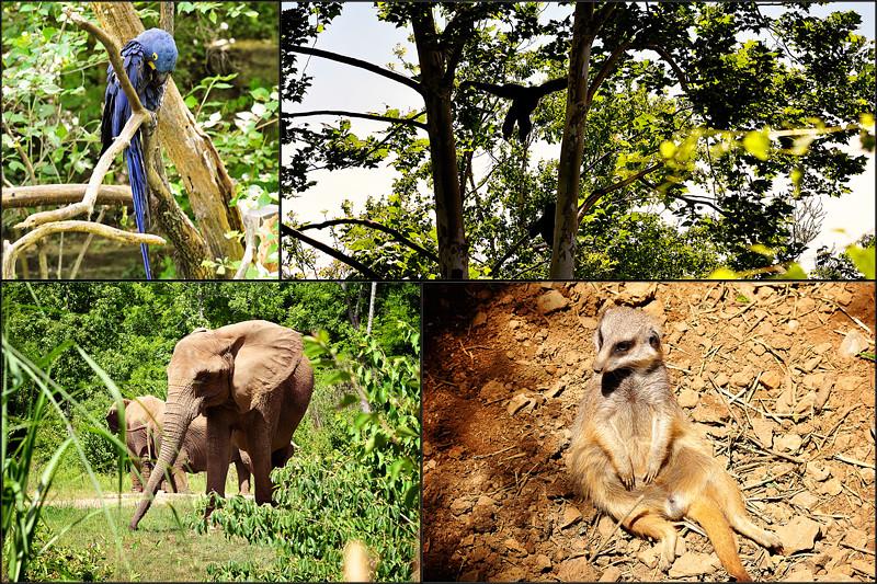 animal blog1