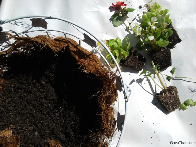 Adding the coconut fiber liner and dirt to the basket and getting ready to arrange the plants inside