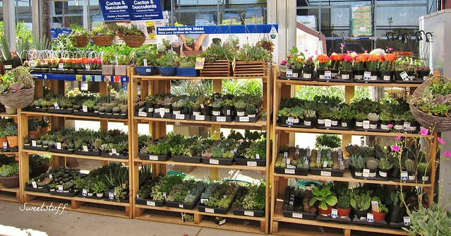 Look at all the pretties at Lowes