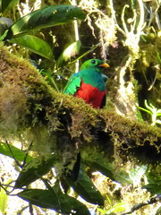Other birds of Ecuador