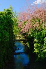 Petit recoin de rivière dans le village (Bucey-les-Gy)