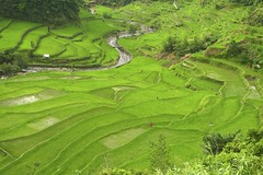 Green Terraces
