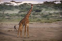Tanzania-Masek-SafariDrive-42