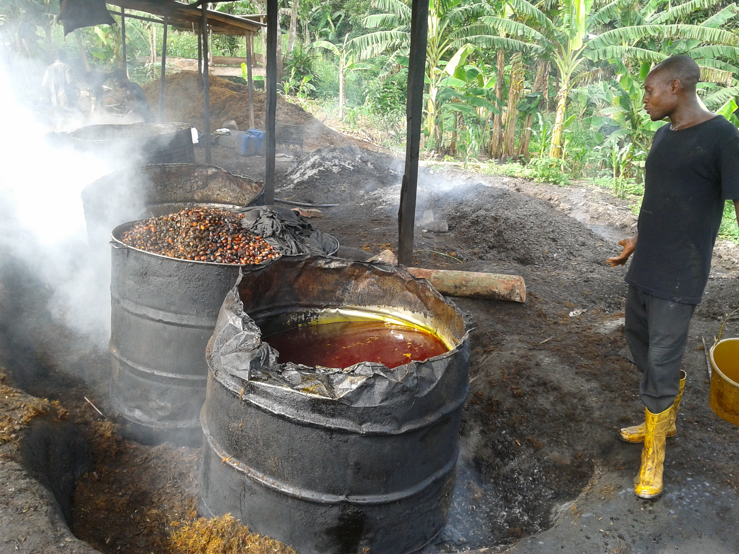 The process of processing palm fruit
