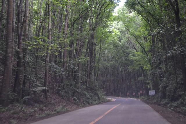 Bilar man made forest